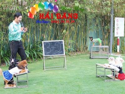 Dịch Vụ Xiếc Chó